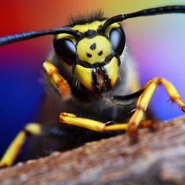 Insekter og smådyr