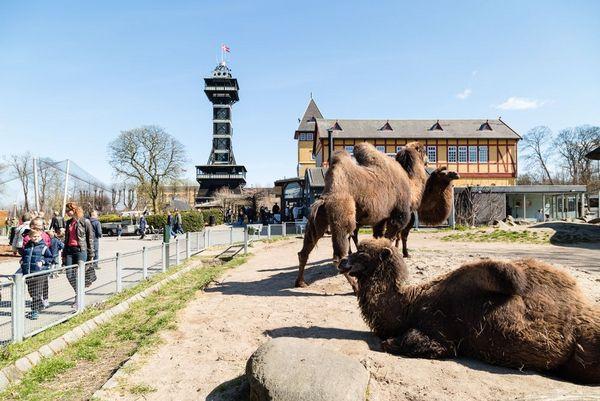 pa   tur i zoo Mikkel Bigandt shutterstock 289345340